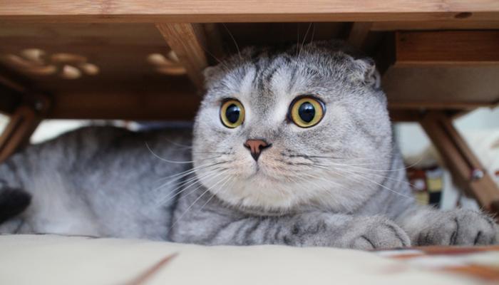 evde-kedi-besliyorsan-bunlara-dikkat_3